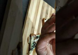 yt 240907 cheesy Bread pizza recipe Bread pizza recipe cook with naseem shorts 322x230 - cheesy Bread pizza recipe| Bread pizza recipe| cook with naseem #shorts